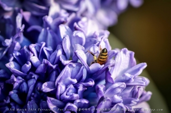 꿀에 취한 벌꿀의 썸네일 사진