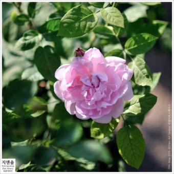 [토분이야기] 지앤숍 시즌오프 20~50%off 식물 세일의 썸네일 사진